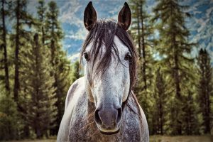 Horse sense about story telling techniques